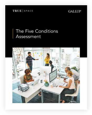 Cover of The Five Conditions Assessment