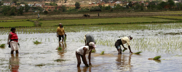Majority of African Farm Workers Struggle to Afford Food