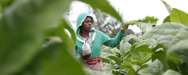 Farm Workers in Africa Pessimistic About Their Lives