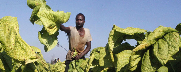 One in Five African Adults Work on Farms